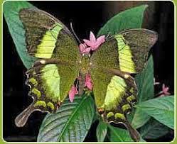 papillons-exotiques-parc